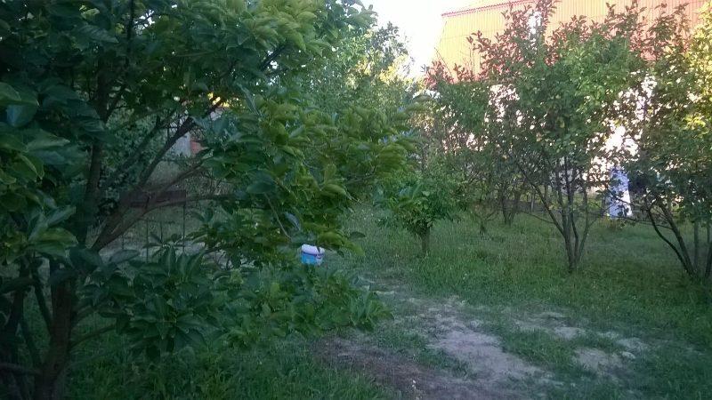 il_mare_dzhubga-_31_